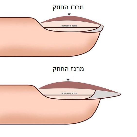 מבנה אנטומי